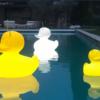 The duck duck xl